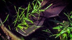 image of mower blade cutting grass