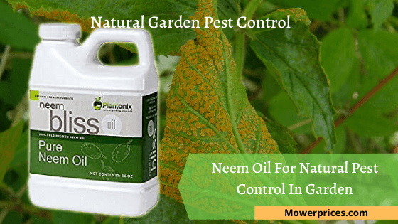 Neem Oil For Natural Pest Control In Garden