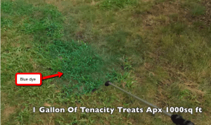 tenacity results when use on bentgrass as a post emergent weed control