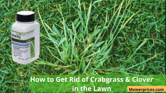 How to Get Rid of Crabgrass in lawn