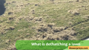 What is dethatching a lawn