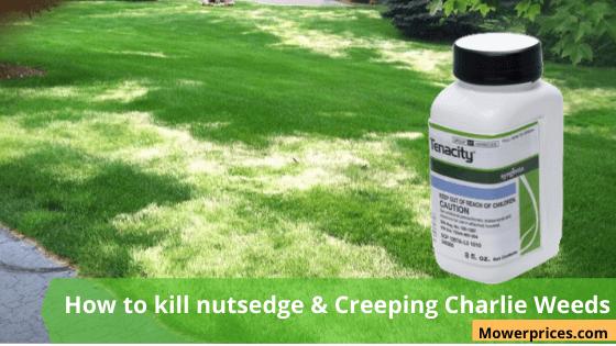 How to kill nutsedge