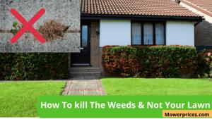 Best Weed Killer That Won't Kill Grass