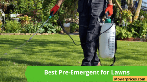 Best Pre-Emergent for Lawns